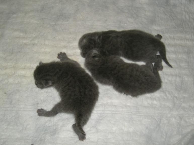 Каких-то три дня назад у нас была всего одна кошка!!!  (под катом фото)