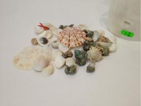 Набор морских ракушек для авторских шкатулок