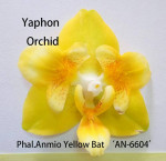 Phal. Anmino Yellow bat AN-6604. 1,7. Тайвань.