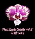 Phal. Kaoda Twinkle '1442'