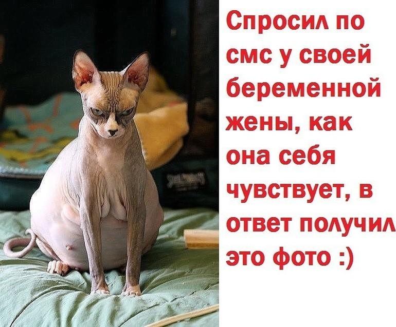 Кошка знает что она беременна