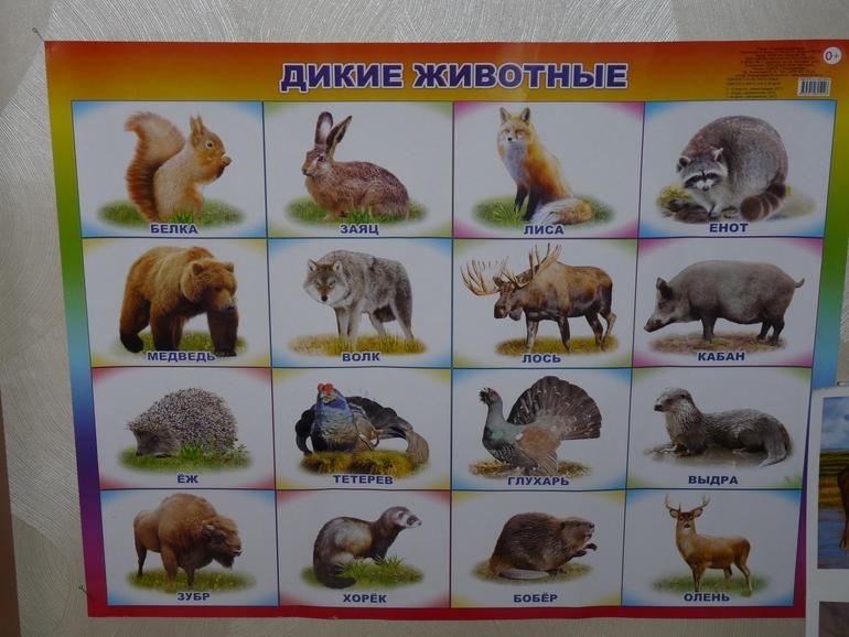 Картинки диких животных наших лесов для детей