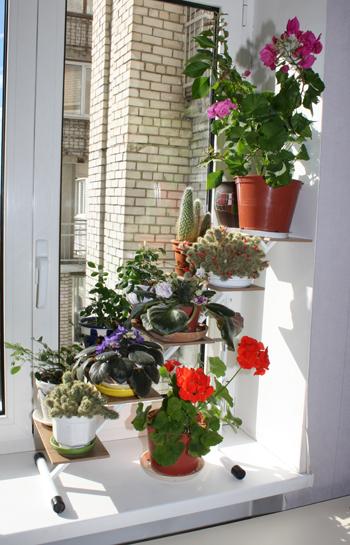 Продолжаем делиться красотой на балконах, окнах) - запись по.