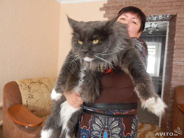 Ох уж эти коты)