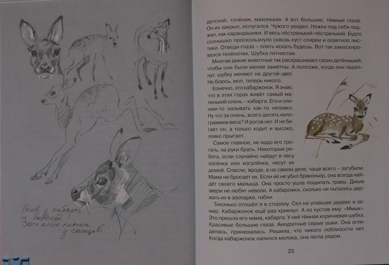 Эро зайчики рисунки фото 337-934