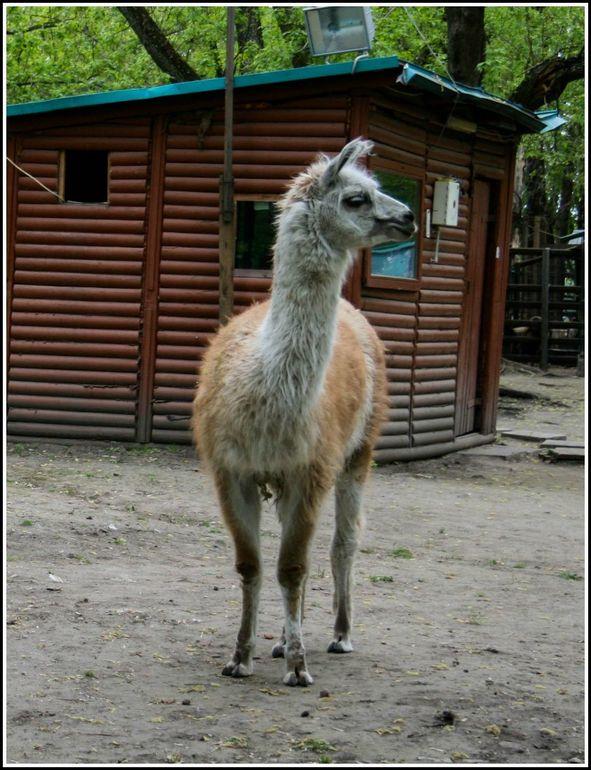 Контактный зоопарк при ЖК