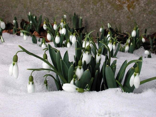 Скоро  придет  долгожданная  весна!!!
