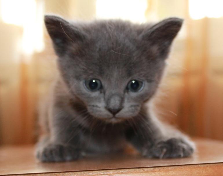 Срочно  отдам  котят.  2  месяца