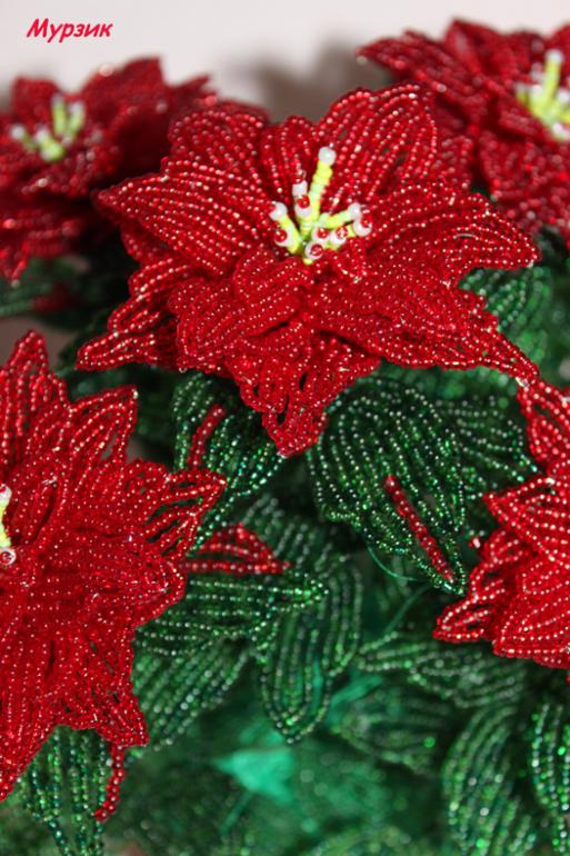 Пуансетия или Рождественская