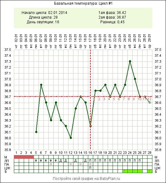 Наши беременные графики с поздней овуляцией