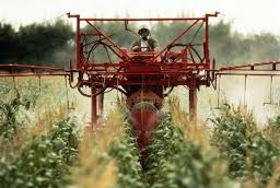 Пестициды и их вред для организма человека.