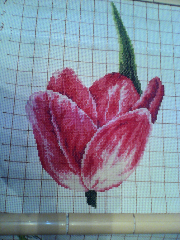 РР картинный. Тюльпаны