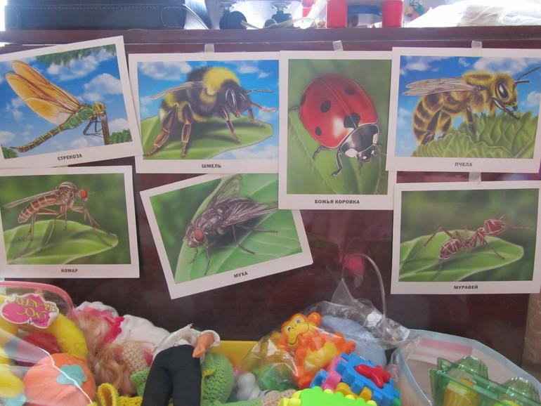 насекомые их знакомые 6