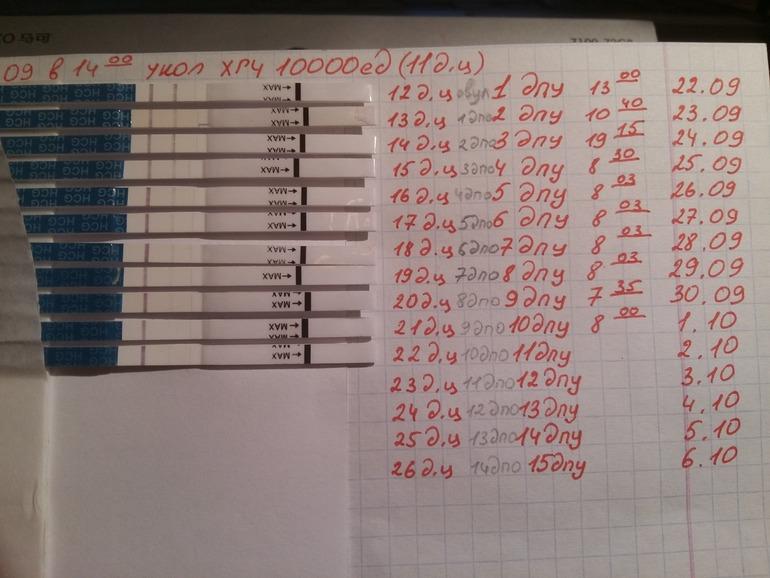 Анализ нужно сдавать на 12 день после процедуры эко.