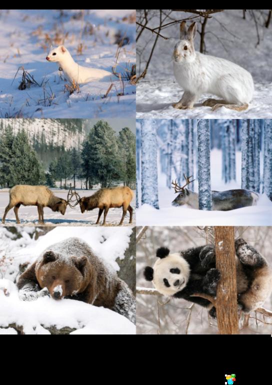 Картинки домашние питомцы зимой