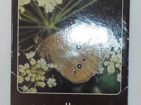 schmetterlinge 2 Бабочки 12 открыток