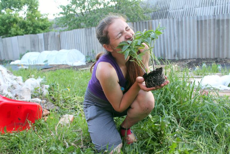 семена бадана как сажать