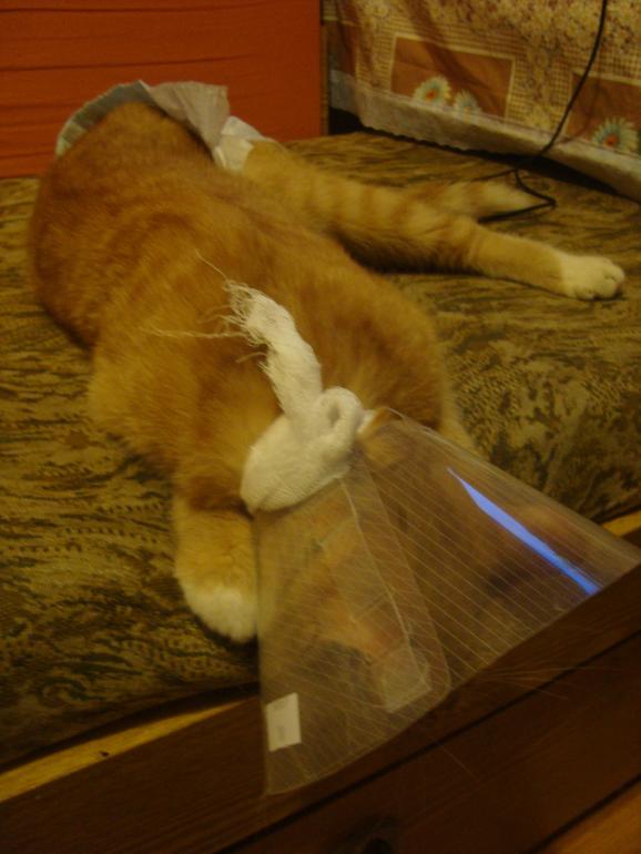 remove cat urine odor from wood furniture