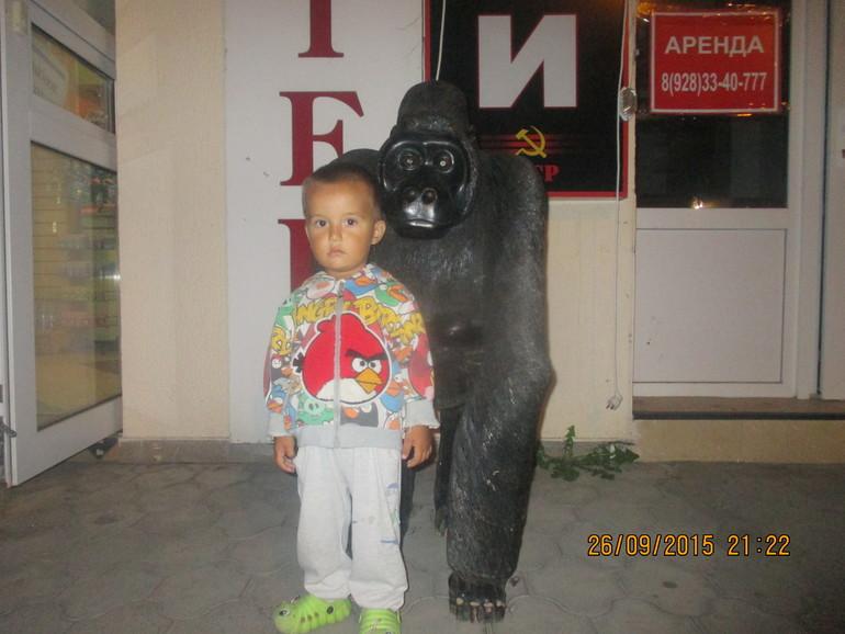 сосет у горилы