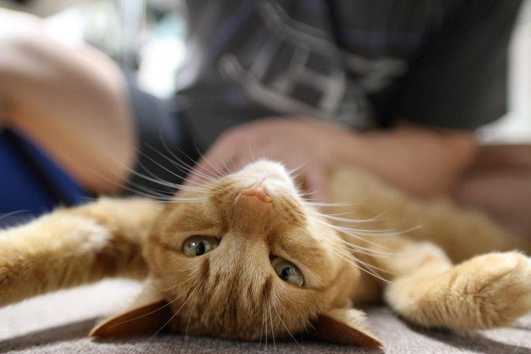Kitycat Массаж
