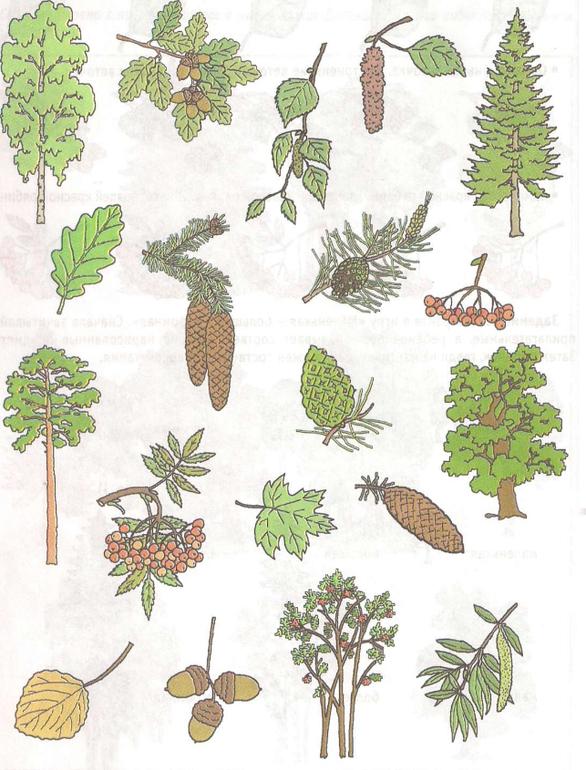 картинки веток разных деревьев комплект входит специальная