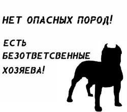 На Херсонщине в городе Голая Пристань от нападения трех овчарок погиб 43-летний мужчина - Цензор.НЕТ 934